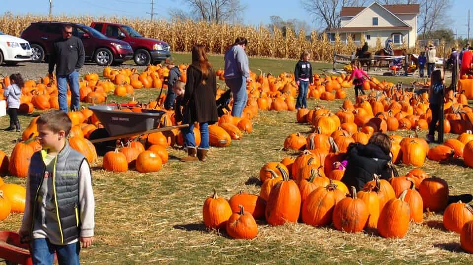 Familiy in punpkin farm in fall