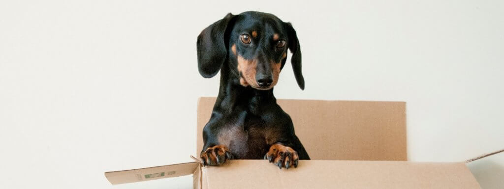 What to Do When Moving With a Pet
