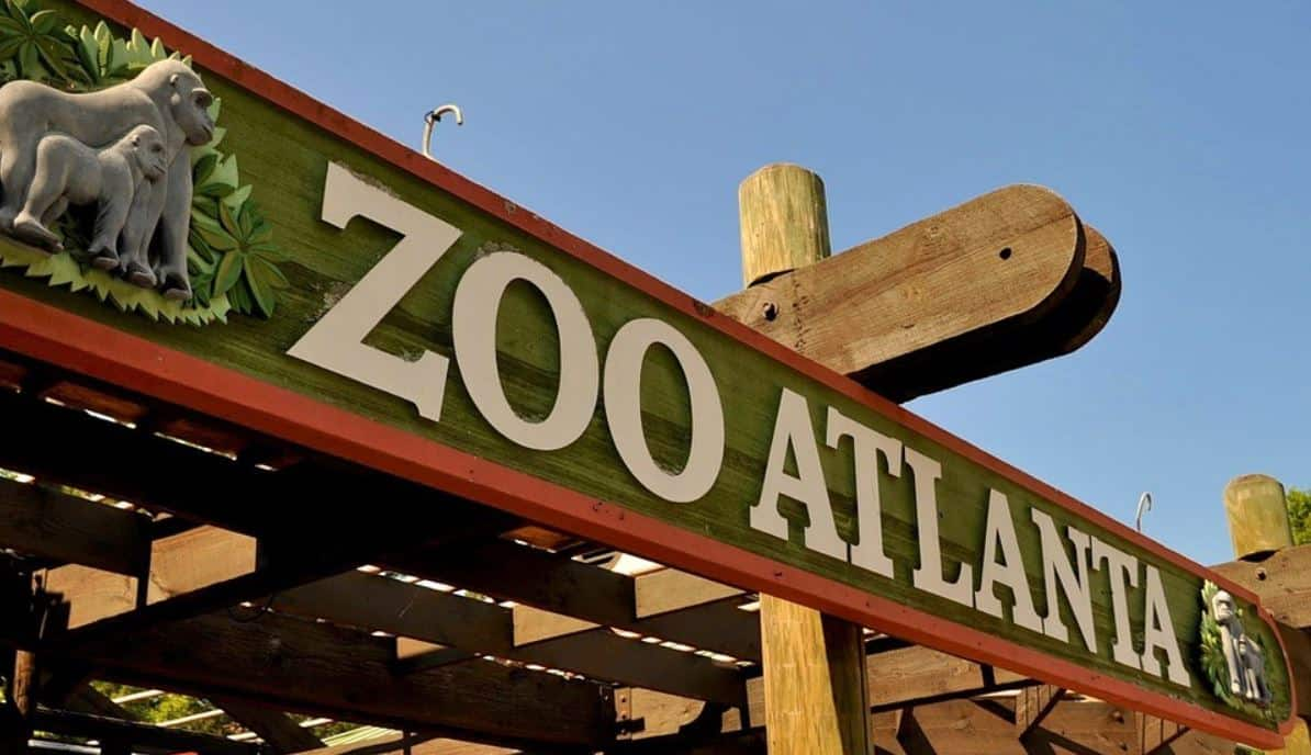 Zoo Atlanta provides an extraordinary glimpse into a wide array of wildlife and offers a fun day