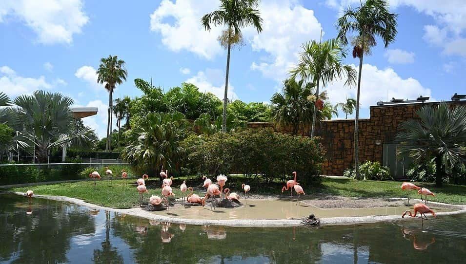 Family staycation idea at Zoo Miami