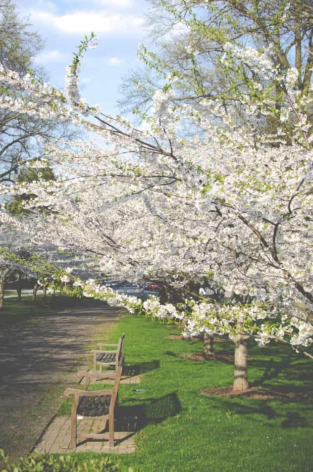 Prospect Hill Park Boston